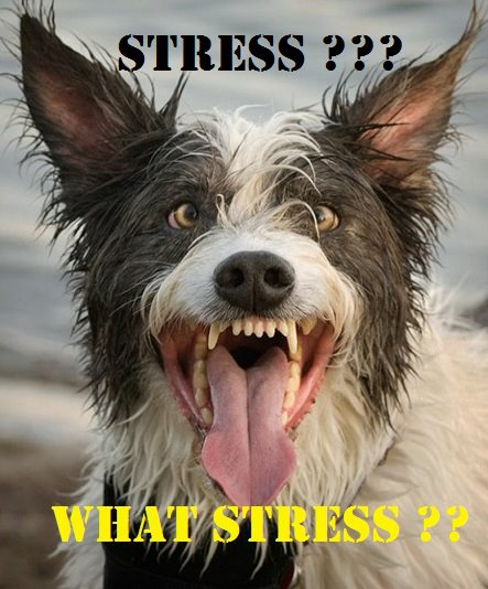 Why can stress make you sick?